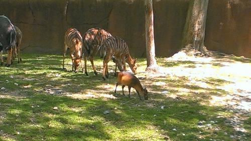 Zoo Scavenger Hunt (May 2014)